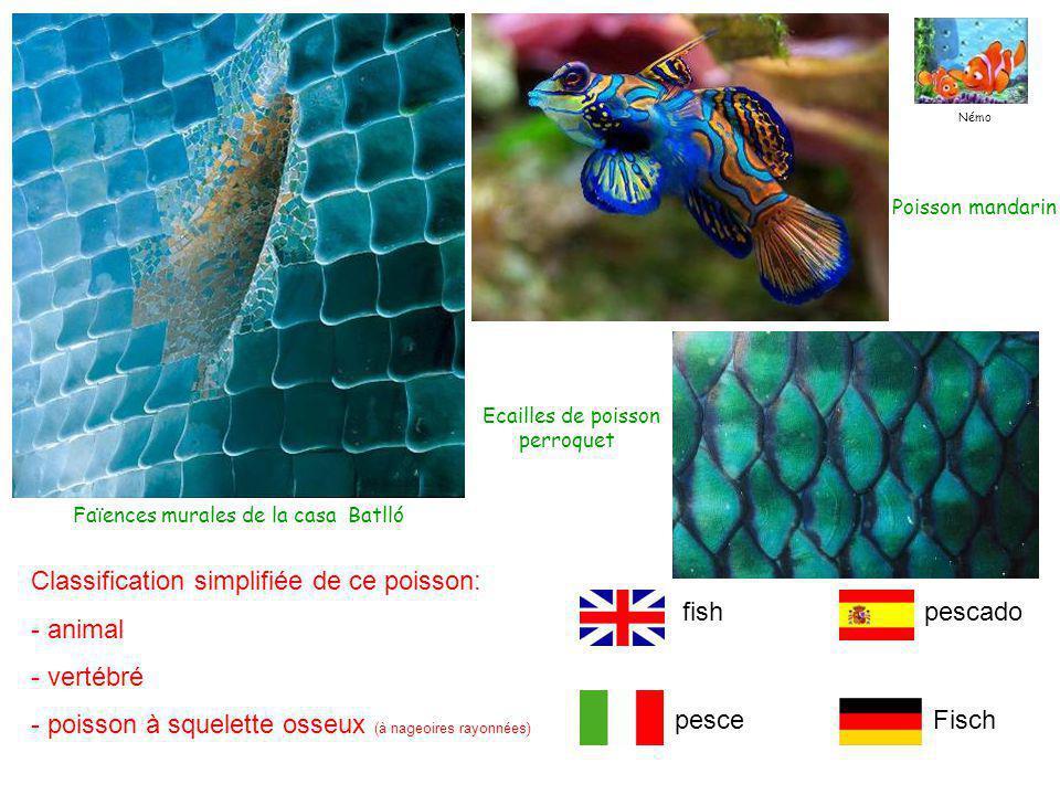 Faïences murales de la casa Batlló Poisson mandarin Ecailles de poisson perroquet Classification simplifiée de ce poisson: - animal - vertébré - poisson à squelette osseux (à nageoires rayonnées) pesceFisch pescadofish Némo