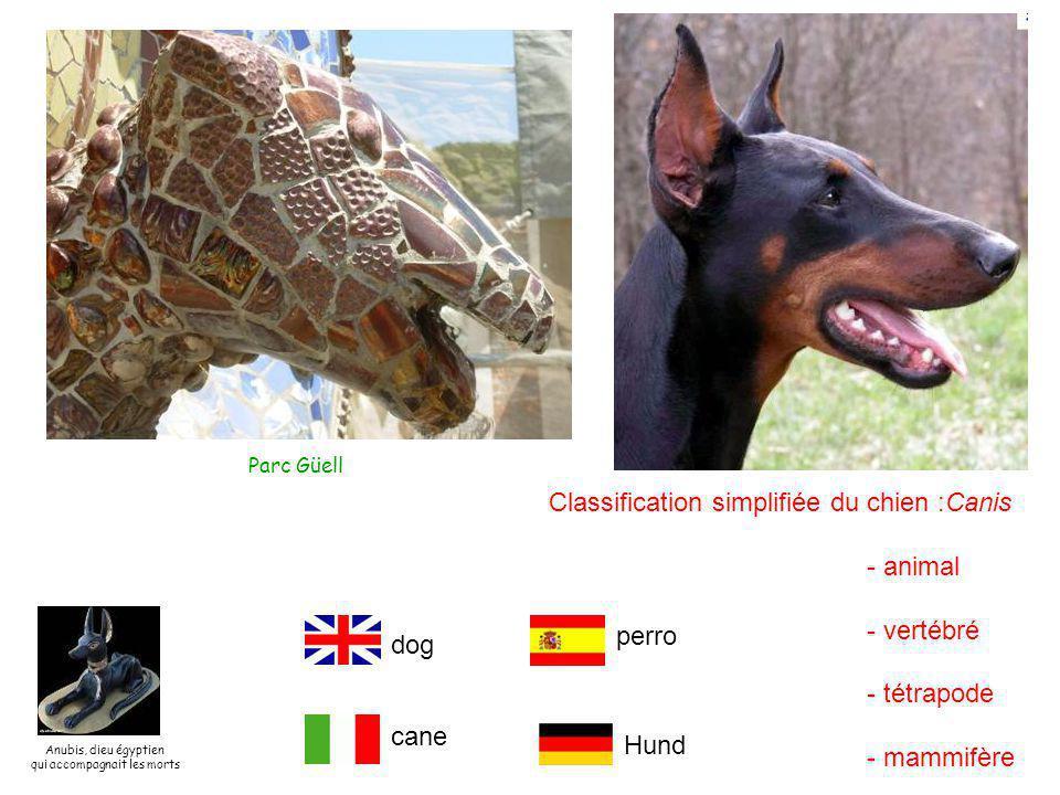 Parc Güell Classification simplifiée du chien :Canis - animal - vertébré - tétrapode - mammifère dog perro Hund cane Anubis, dieu égyptien qui accompagnait les morts