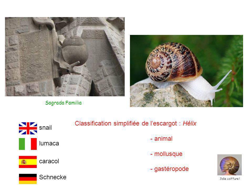 Sagrada Familia Classification simplifiée de l'escargot : Hélix - animal - mollusque - gastéropode Schnecke lumaca snail caracol Jolie coiffure !