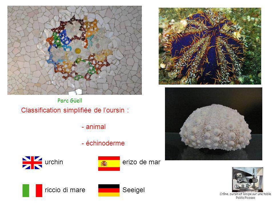 riccio di mare erizo de marurchin Seeigel Classification simplifiée de l'oursin : - animal - échinoderme Crâne, oursin et lampe sur une table Pablo Picasso Parc Güell