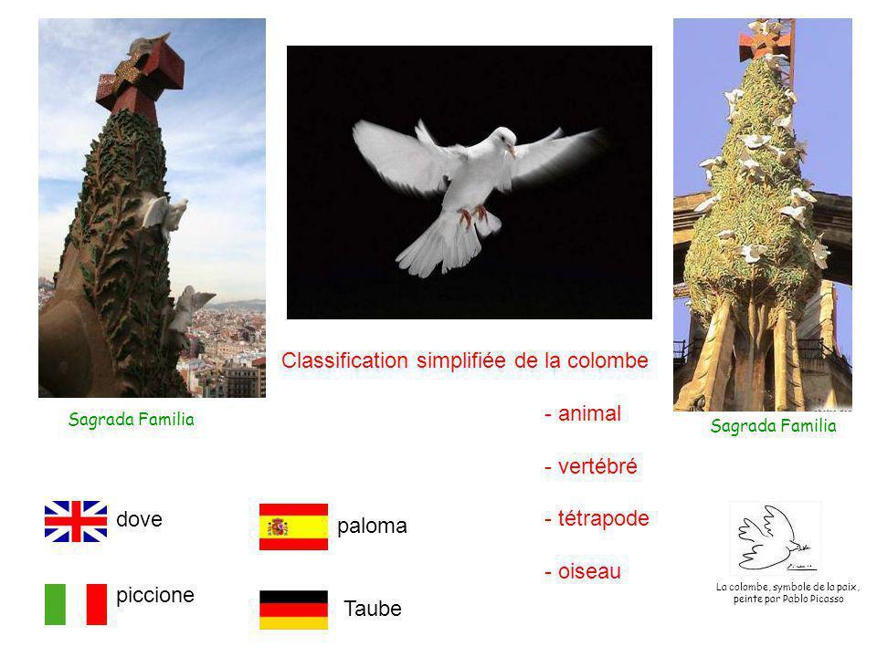 Classification simplifiée de la colombe - animal - vertébré - tétrapode - oiseau Sagrada Familia dove piccione paloma Taube La colombe, symbole de la paix, peinte par Pablo Picasso
