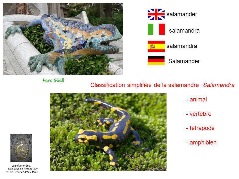 Classification simplifiée de la salamandre :Salamandra - animal - vertébré - tétrapode - amphibien salamandra Salamander salamander Parc Güell La salamandre, emblème de François 1 er roi de France 1494 - 1547