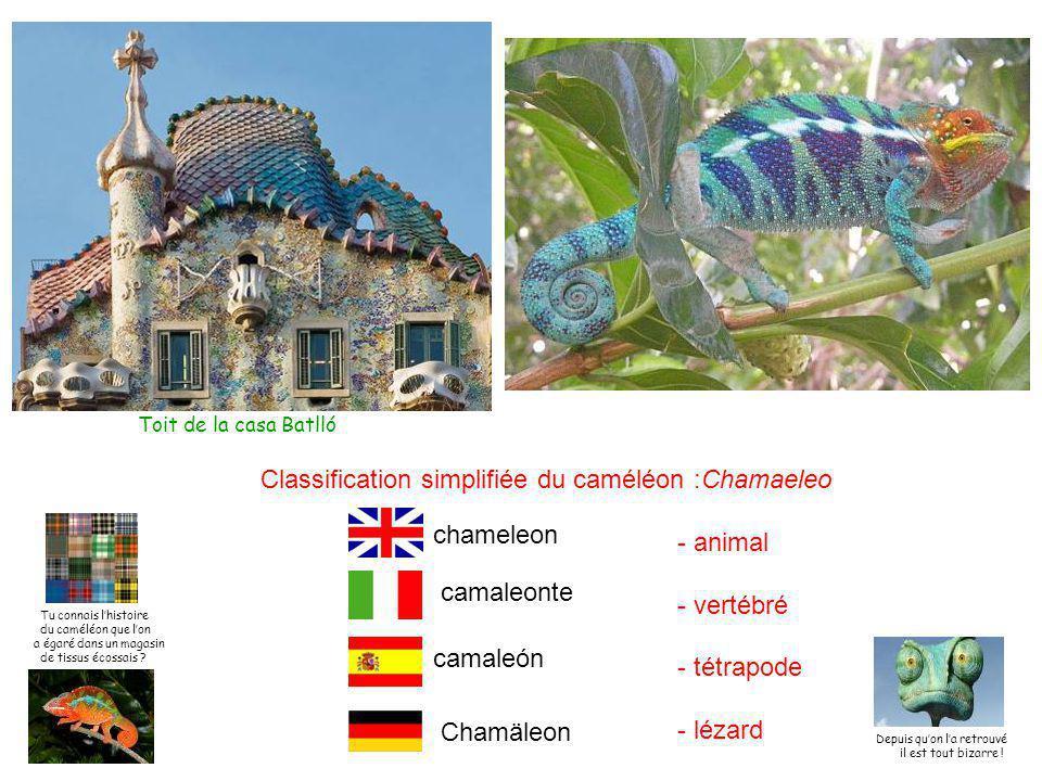 Toit de la casa Batlló Classification simplifiée du caméléon :Chamaeleo - animal - vertébré - tétrapode - lézard Chamäleon camaleón chameleon camaleonte Tu connais l'histoire du caméléon que l'on a égaré dans un magasin de tissus écossais .