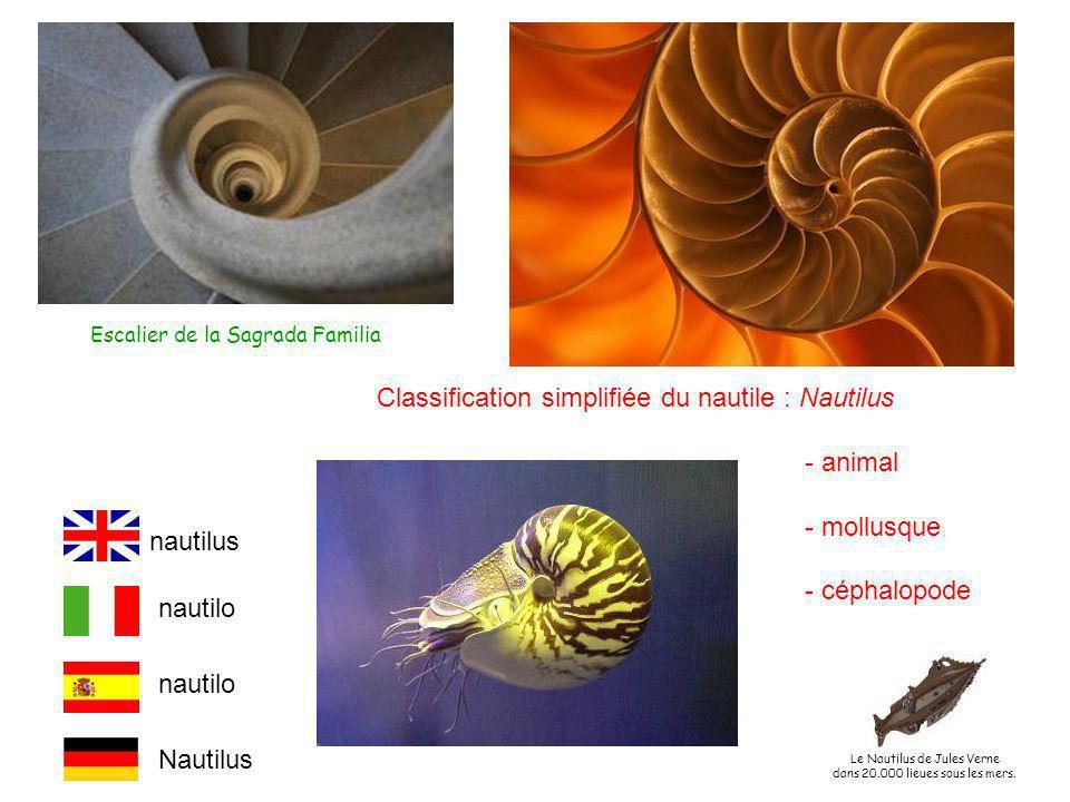 Escalier de la Sagrada Familia Classification simplifiée du nautile : Nautilus - animal - mollusque - céphalopode nautilus nautilo Nautilus Le Nautilus de Jules Verne dans 20.000 lieues sous les mers.