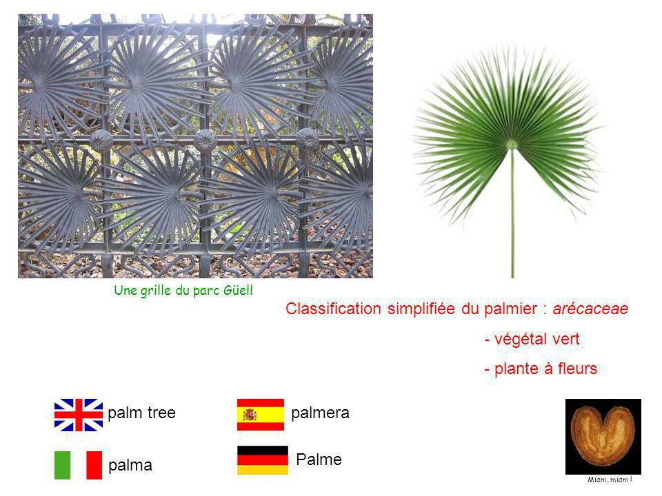 Classification simplifiée du palmier : arécaceae - végétal vert - plante à fleurs palm tree palma palmera Palme Miam, miam .