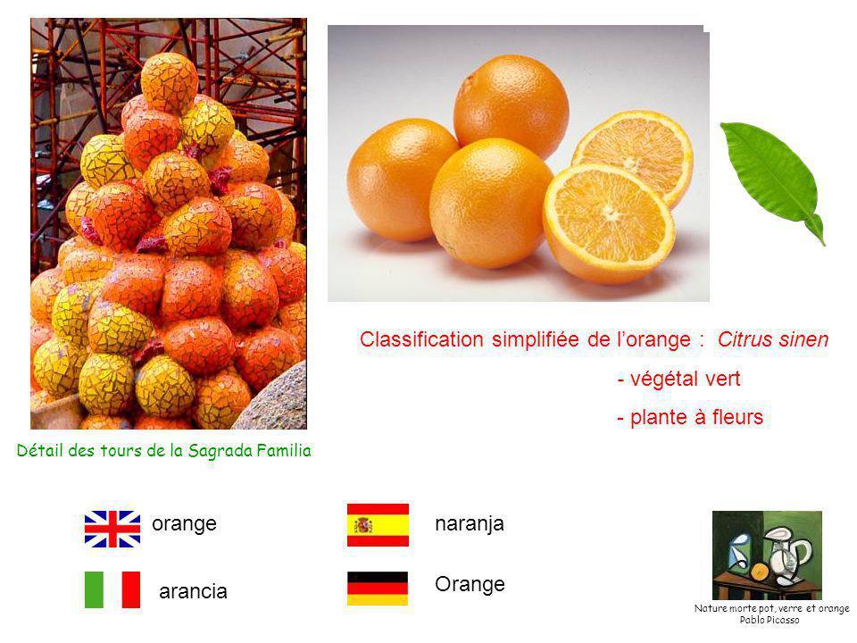 Détail des tours de la Sagrada Familia Classification simplifiée de l'orange : Citrus sinen - végétal vert - plante à fleurs orange arancia naranja Orange Nature morte pot, verre et orange Pablo Picasso