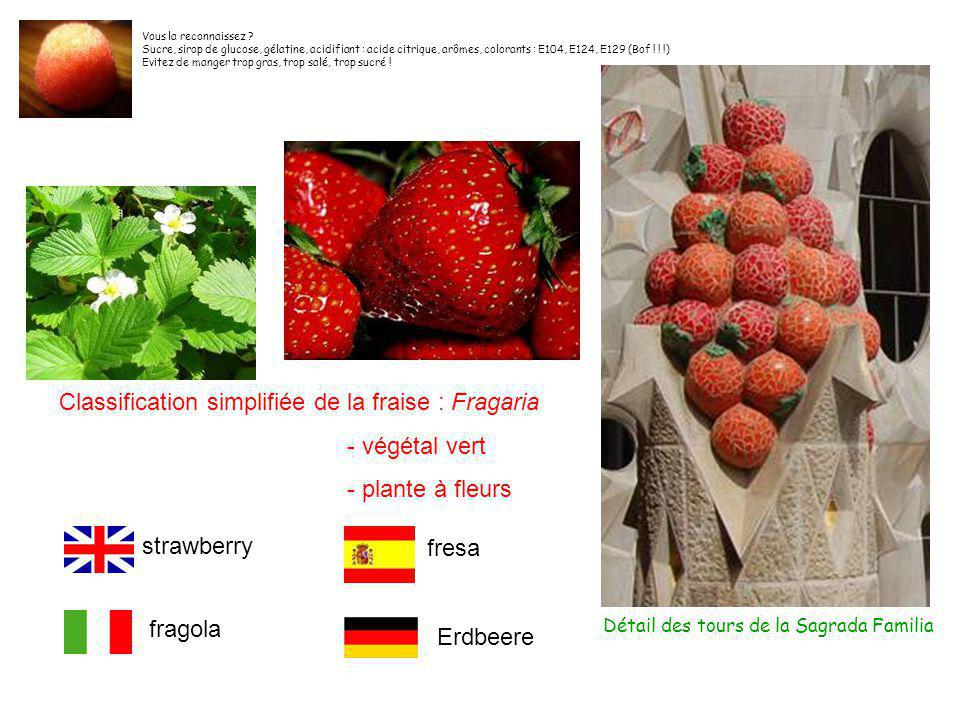 Classification simplifiée de la fraise : Fragaria - végétal vert - plante à fleurs Détail des tours de la Sagrada Familia strawberry fresa fragola Erdbeere Vous la reconnaissez .