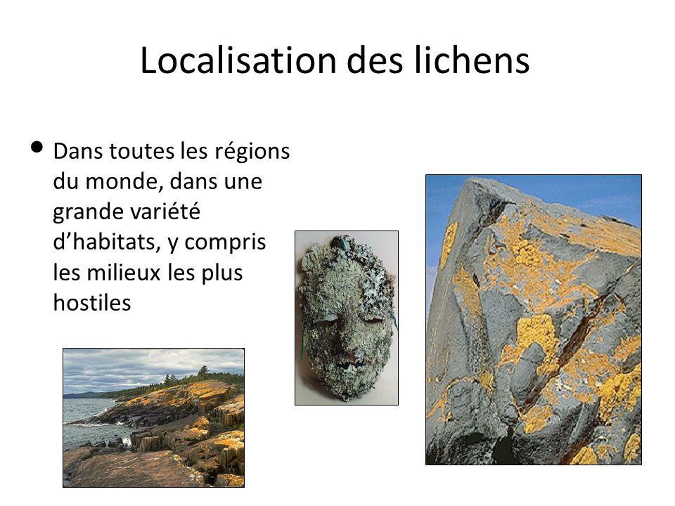 Localisation des lichens Dans toutes les régions du monde, dans une grande variété d'habitats, y compris les milieux les plus hostiles