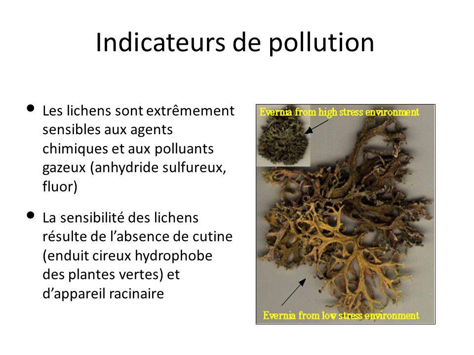 Indicateurs de pollution Les lichens sont extrêmement sensibles aux agents chimiques et aux polluants gazeux (anhydride sulfureux, fluor) La sensibili