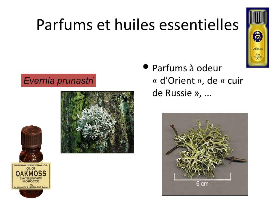 Parfums et huiles essentielles Parfums à odeur « d'Orient », de « cuir de Russie », … Evernia prunastri