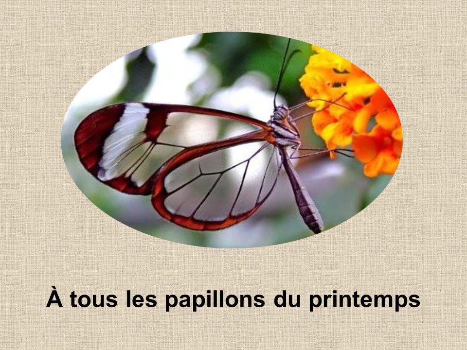 À tous les papillons du printemps