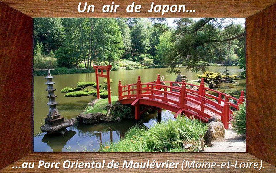 Un air de Canada… …au Lac du Lispach (Vosges).