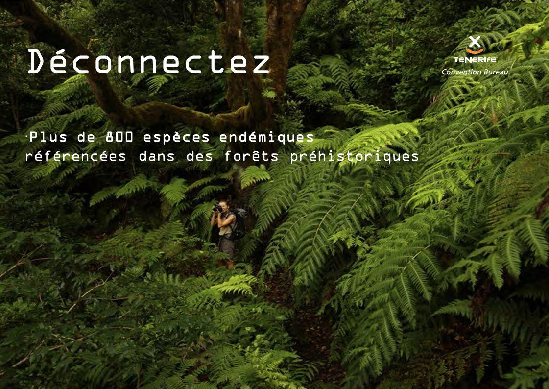 Déconnectez  Plus de 800 espèces endémiques référencées dans des forêts préhistoriques