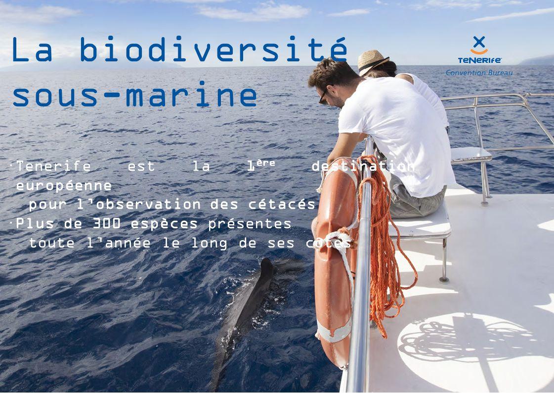  Tenerife est la 1 ère destination européenne pour l'observation des cétacés  Plus de 300 espèces présentes toute l'année le long de ses côtes La biodiversité sous-marine