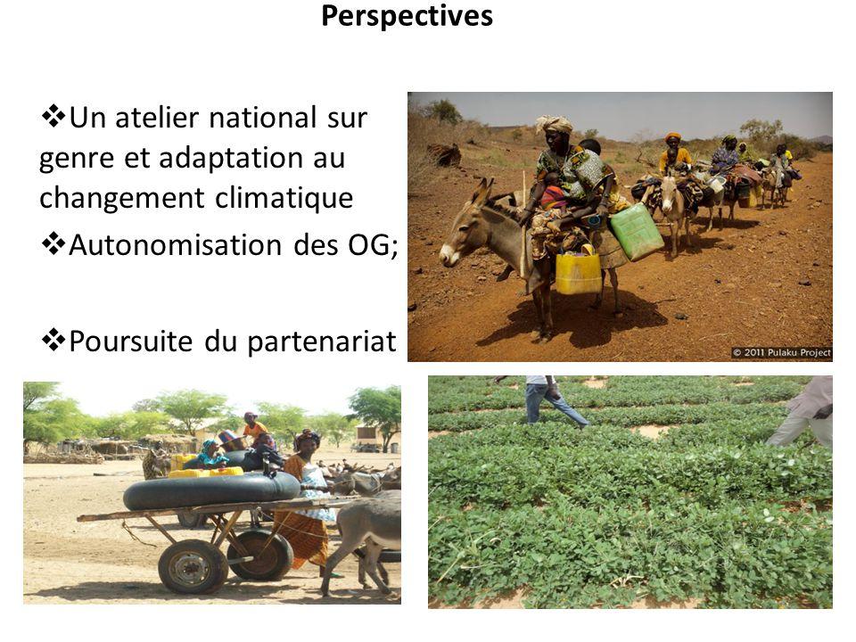 Perspectives  Un atelier national sur genre et adaptation au changement climatique  Autonomisation des OG;  Poursuite du partenariat