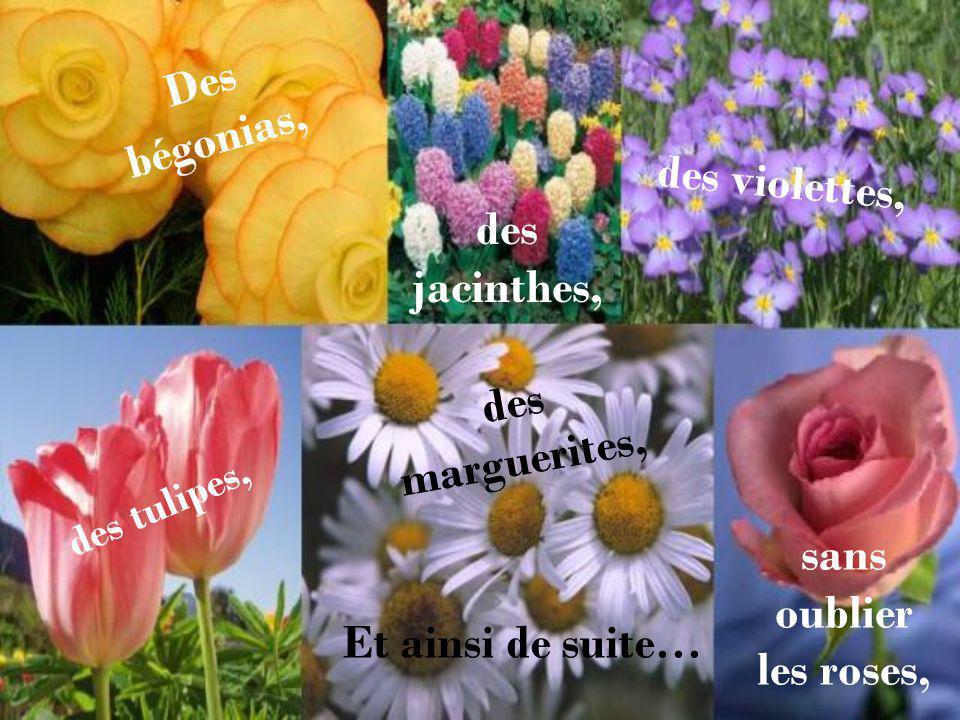 Des bégonias, des jacinthes, des violettes, des tulipes, des marguerites, sans oublier les roses, Et ainsi de suite…