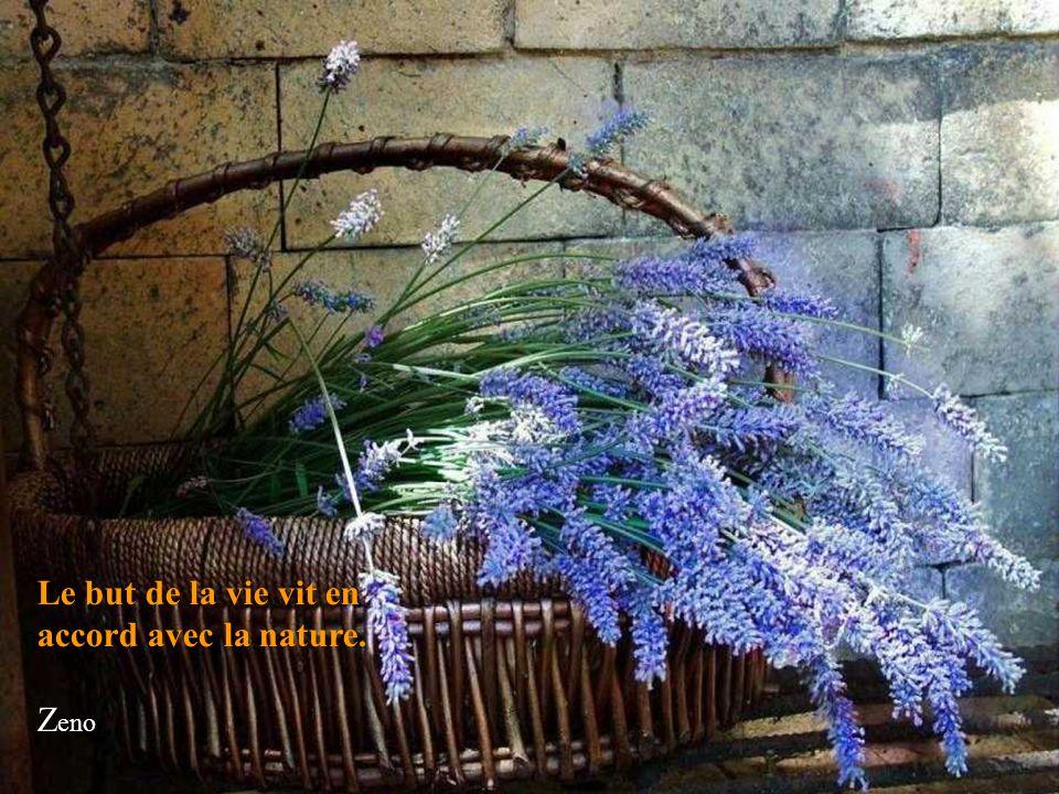 L'Amour est antérieur à la vie, postérieur à la mort, le paraphe de la création et l'exposant de la Terre. Emily Dickinson