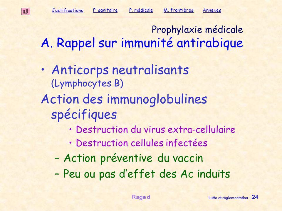 Justifications P. sanitaireP. médicaleAnnexesM. frontières Rage d Lutte et réglementation : 24 Prophylaxie médicale A. Rappel sur immunité antirabique