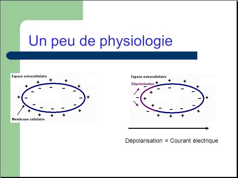 Un peu de physiologie Dépolarisation = Courant électrique