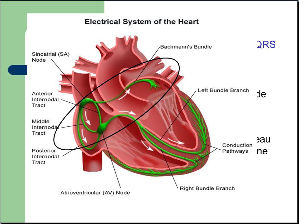 -Prennent leur origine au niveau des oreillettes ou de la jonction auriculo ventriculaire. -L'influx électrique emprunte la voie normale (faisceau de