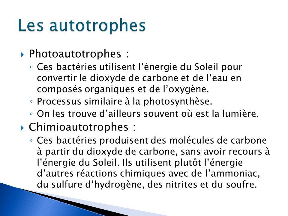  Photoautotrophes : ◦ Ces bactéries utilisent l'énergie du Soleil pour convertir le dioxyde de carbone et de l'eau en composés organiques et de l'oxygène.