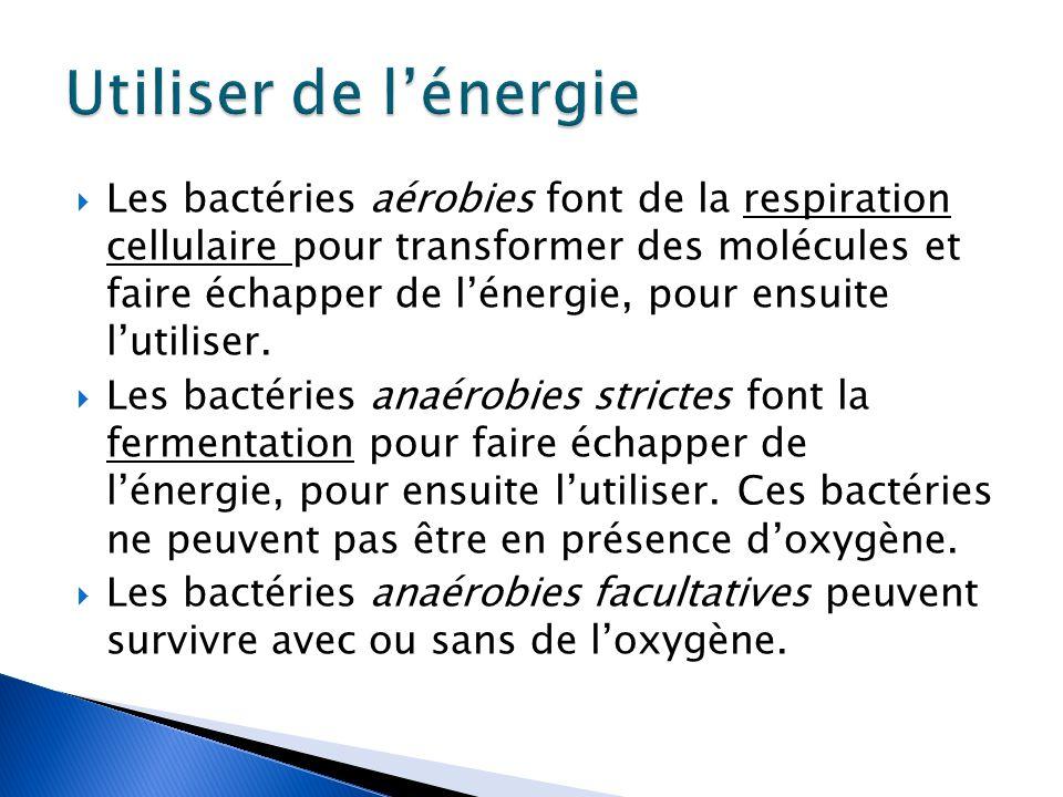  Les bactéries aérobies font de la respiration cellulaire pour transformer des molécules et faire échapper de l'énergie, pour ensuite l'utiliser.