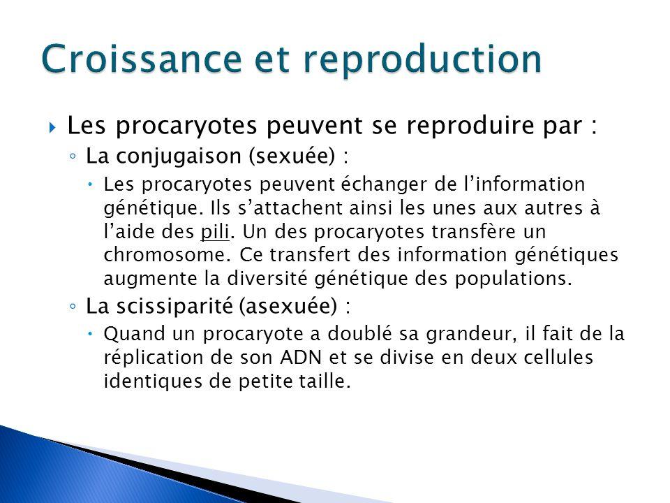  Les procaryotes peuvent se reproduire par : ◦ La conjugaison (sexuée) :  Les procaryotes peuvent échanger de l'information génétique.
