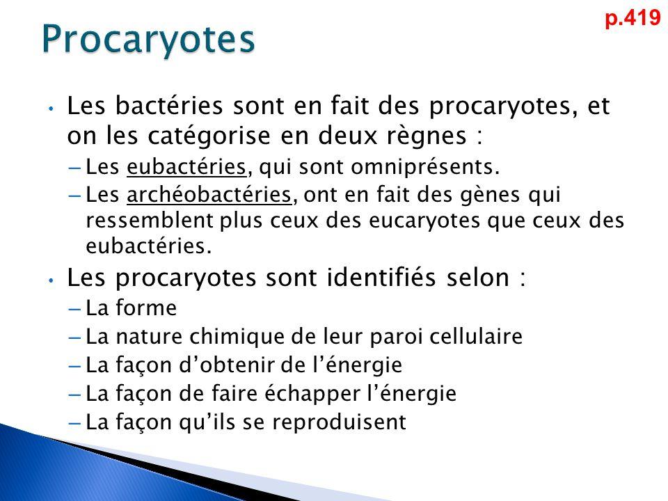 Les bactéries sont en fait des procaryotes, et on les catégorise en deux règnes : – Les eubactéries, qui sont omniprésents.