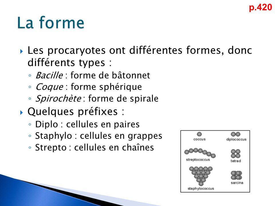  Les procaryotes ont différentes formes, donc différents types : ◦ Bacille : forme de bâtonnet ◦ Coque : forme sphérique ◦ Spirochète : forme de spirale  Quelques préfixes : ◦ Diplo : cellules en paires ◦ Staphylo : cellules en grappes ◦ Strepto : cellules en chaînes p.420