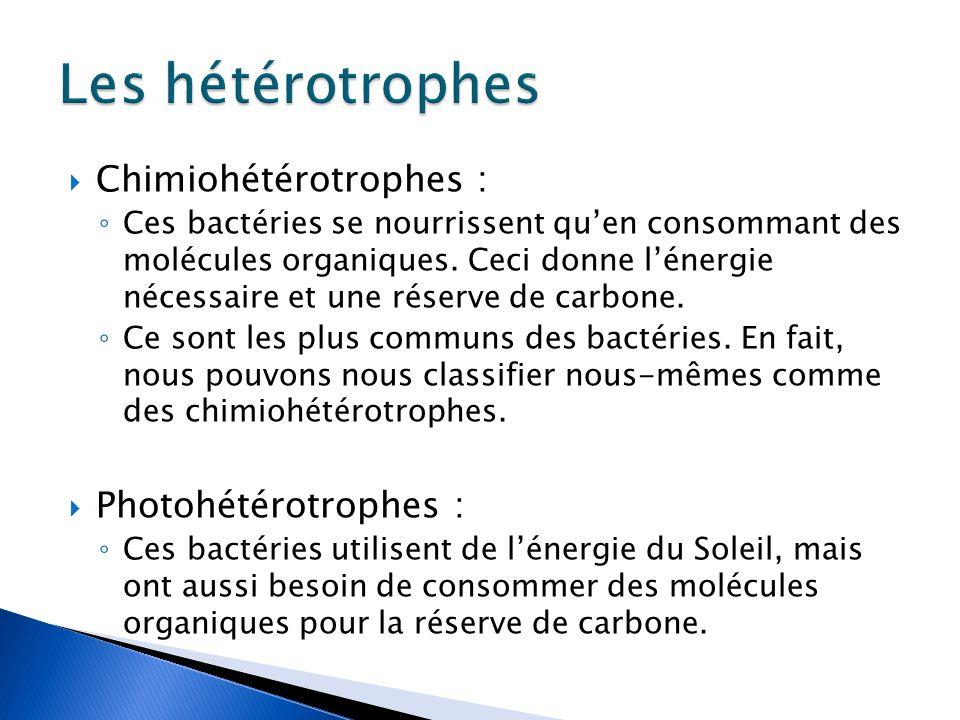  Chimiohétérotrophes : ◦ Ces bactéries se nourrissent qu'en consommant des molécules organiques.