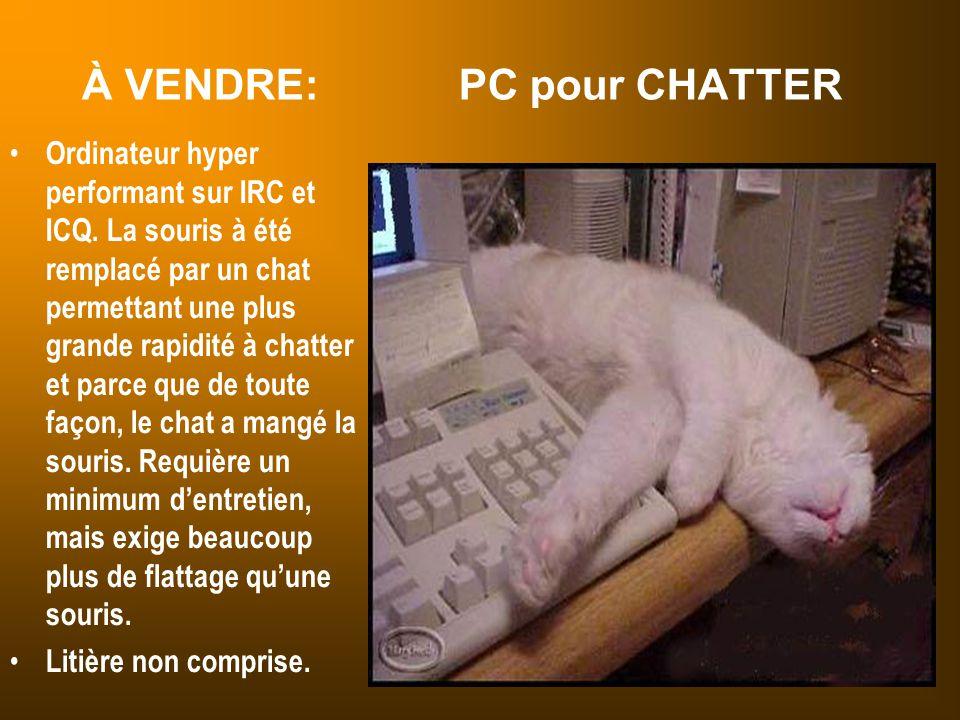 À VENDRE: PC pour CHATTER Ordinateur hyper performant sur IRC et ICQ. La souris à été remplacé par un chat permettant une plus grande rapidité à chatt