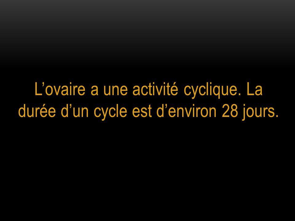 L'ovaire a une activité cyclique. La durée d'un cycle est d'environ 28 jours.