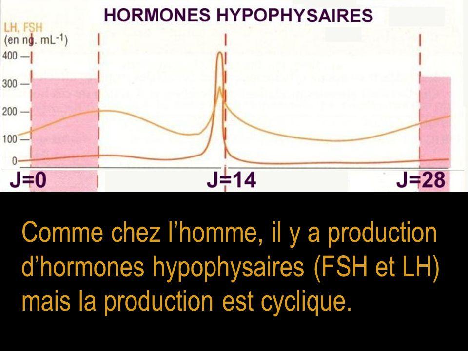Comme chez l'homme, il y a production d'hormones hypophysaires (FSH et LH) mais la production est cyclique.