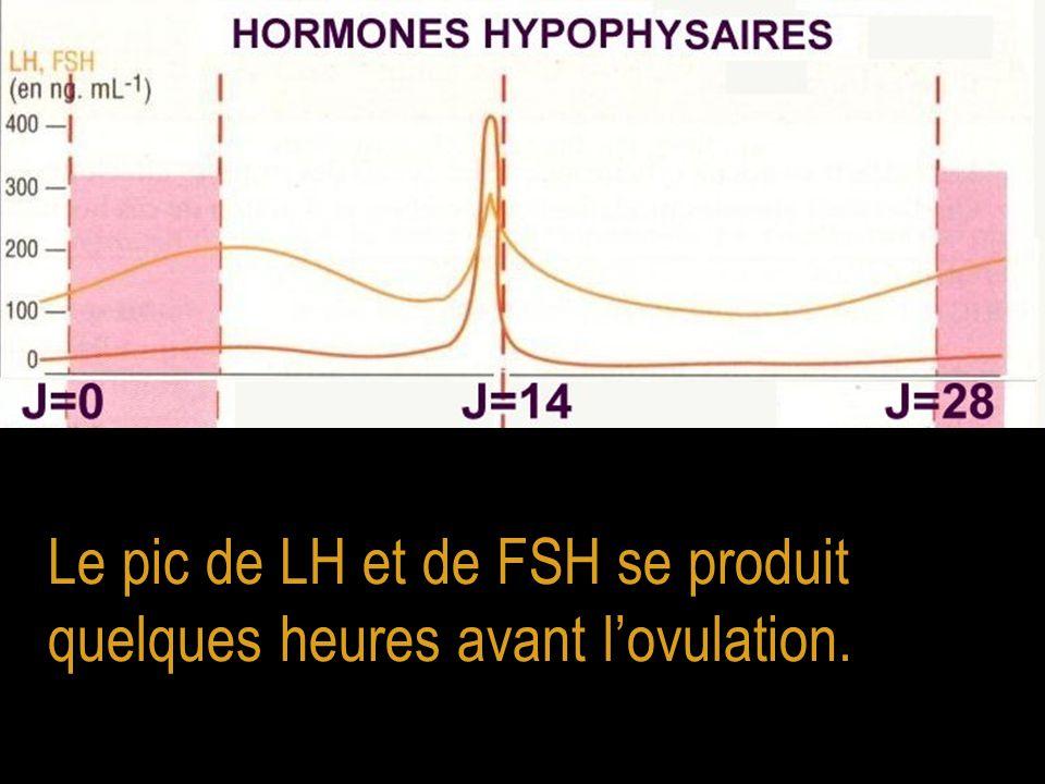 Le pic de LH et de FSH se produit quelques heures avant l'ovulation.