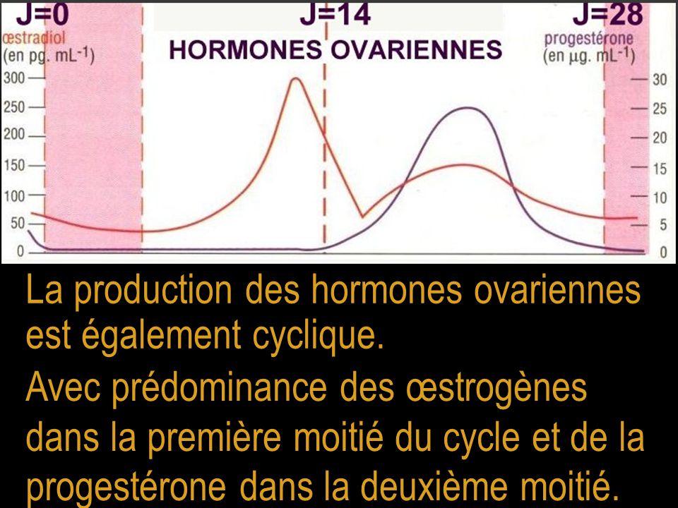 La production des hormones ovariennes est également cyclique. Avec prédominance des œstrogènes dans la première moitié du cycle et de la progestérone