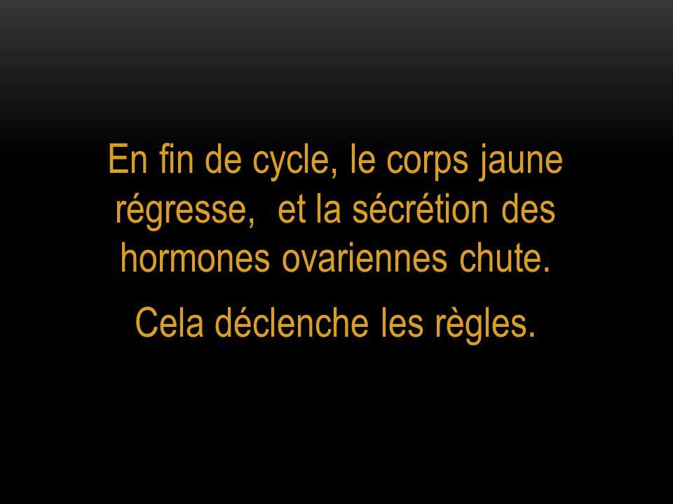 En fin de cycle, le corps jaune régresse, et la sécrétion des hormones ovariennes chute. Cela déclenche les règles.