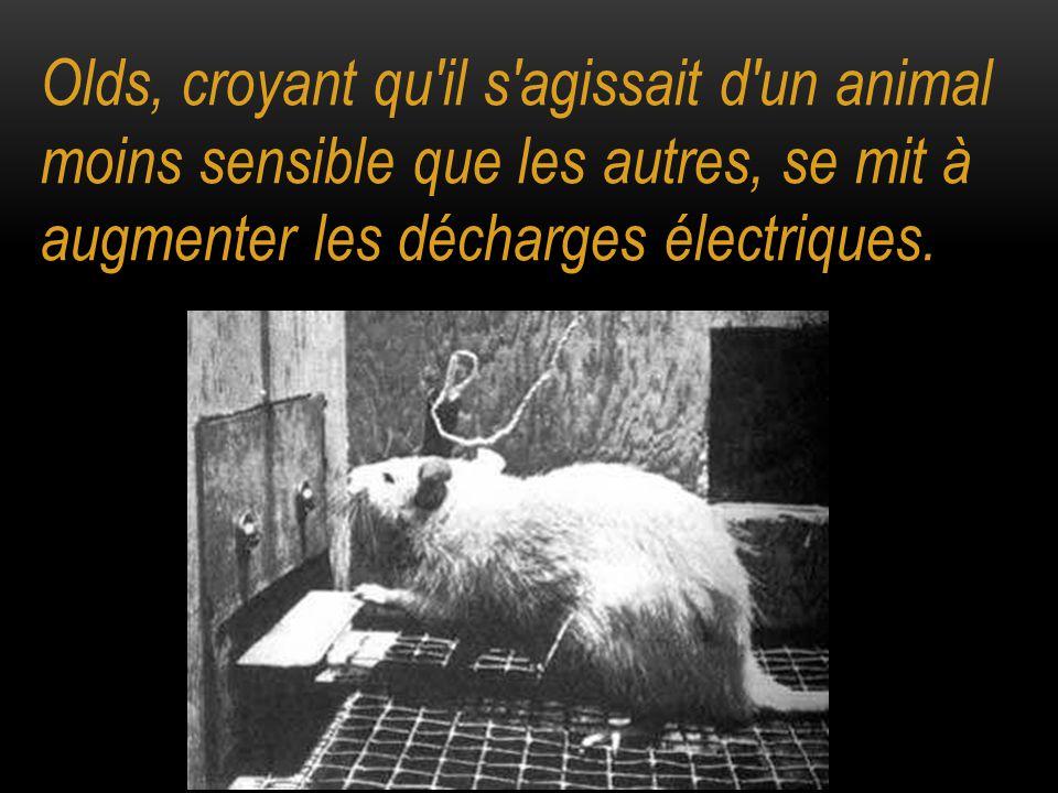 Olds, croyant qu'il s'agissait d'un animal moins sensible que les autres, se mit à augmenter les décharges électriques.