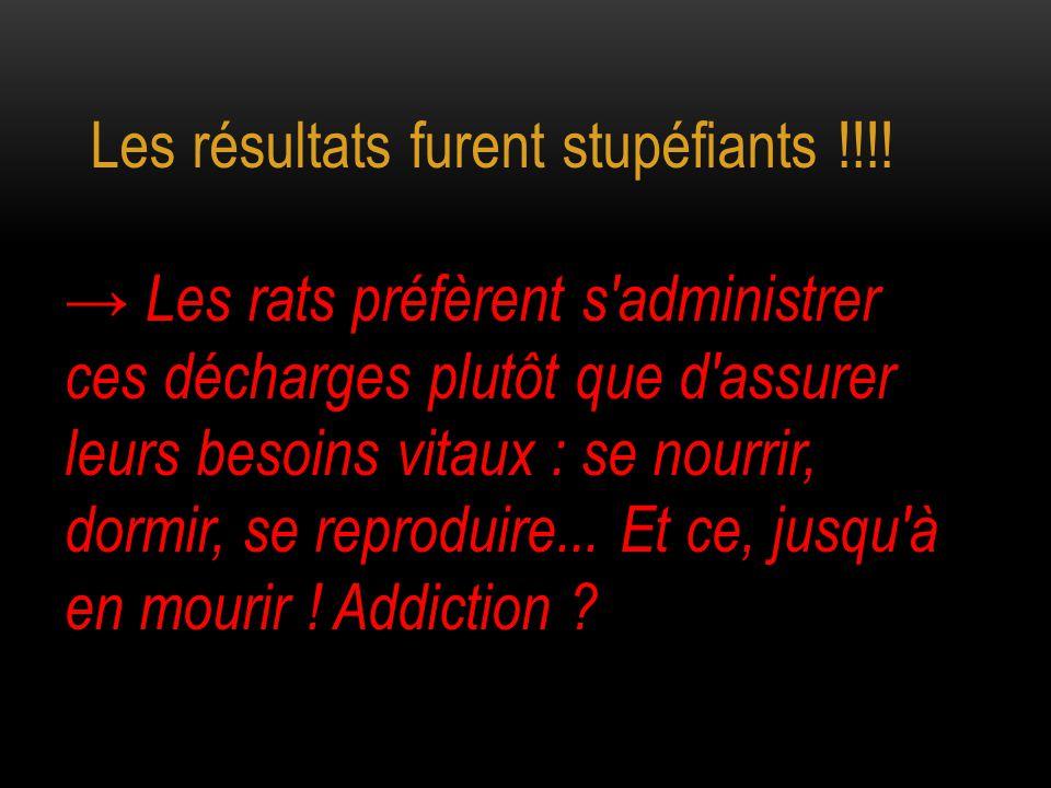 → Les rats préfèrent s'administrer ces décharges plutôt que d'assurer leurs besoins vitaux : se nourrir, dormir, se reproduire... Et ce, jusqu'à en mo