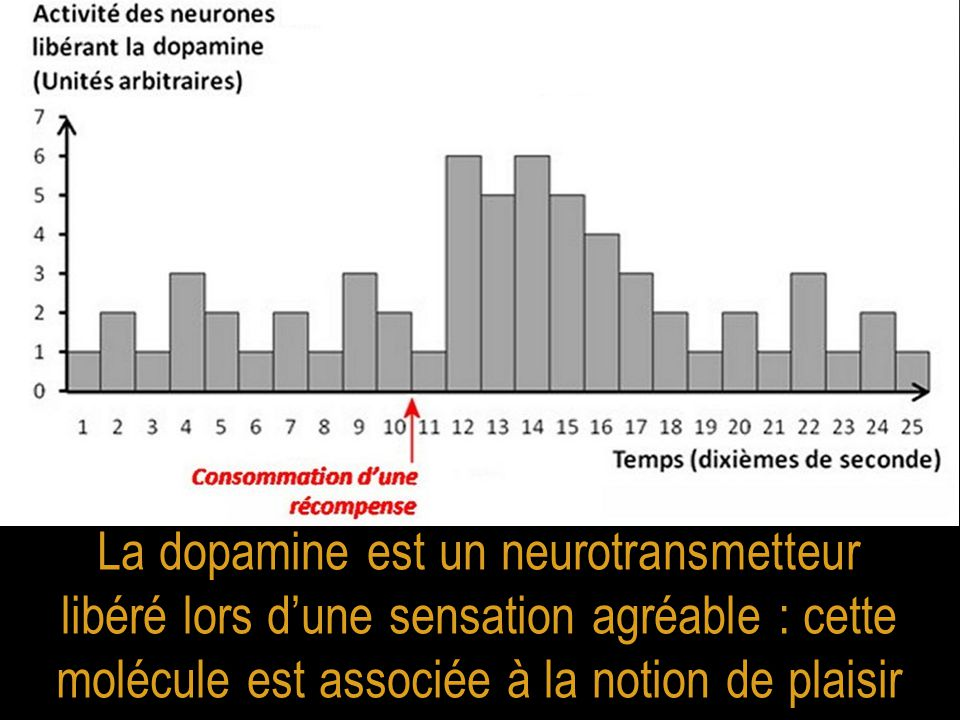 La dopamine est un neurotransmetteur libéré lors d'une sensation agréable : cette molécule est associée à la notion de plaisir