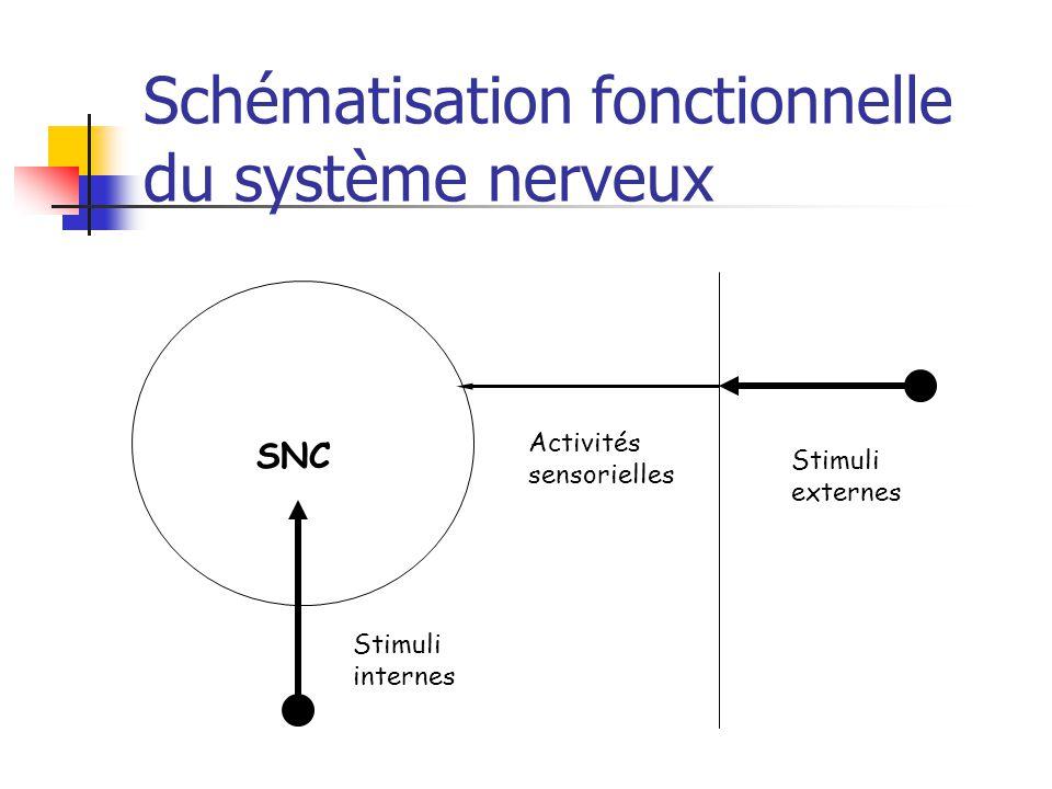 Schématisation fonctionnelle du système nerveux SNC Activités sensorielles Stimuli externes Stimuli internes