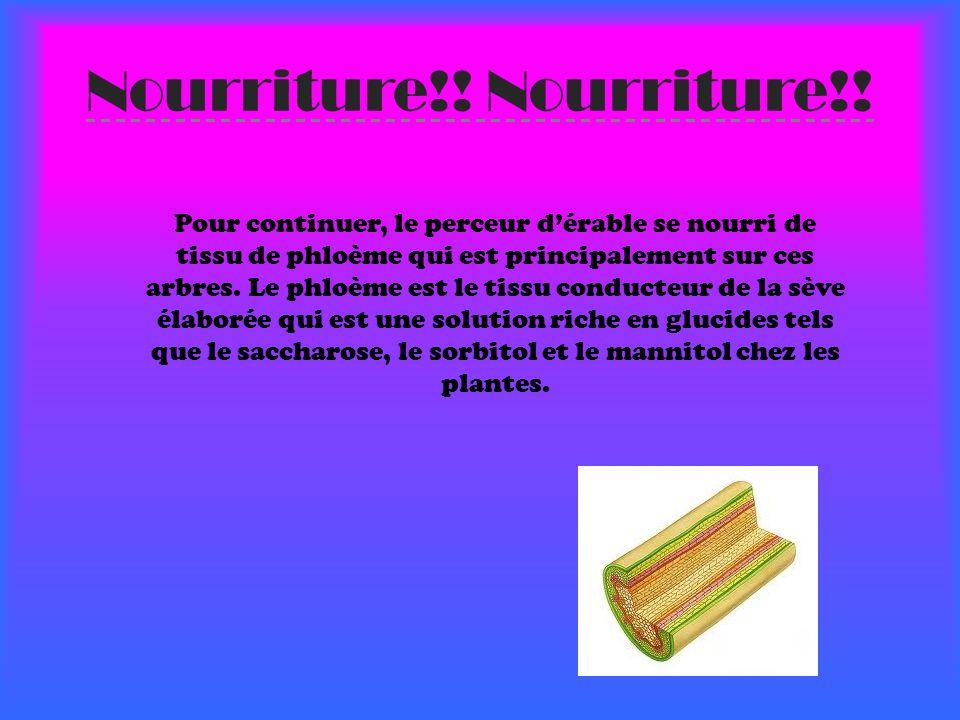 Nourriture!.
