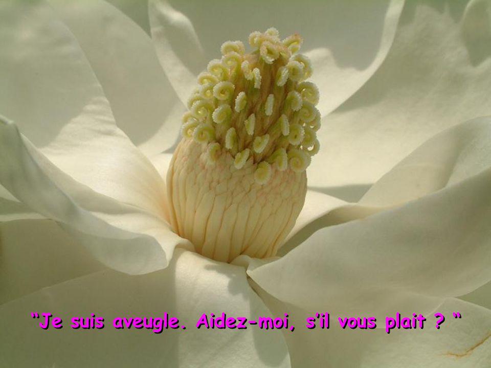 Une fleur, un brin d'herbe sont ses messagers.Le Printemps arrive.
