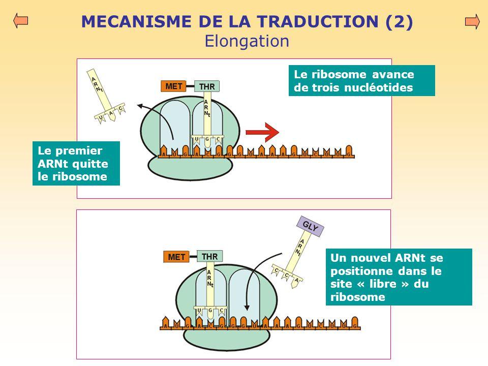 MECANISME DE LA TRADUCTION (2) Elongation Le ribosome avance de trois nucléotides Le premier ARNt quitte le ribosome Un nouvel ARNt se positionne dans le site « libre » du ribosome