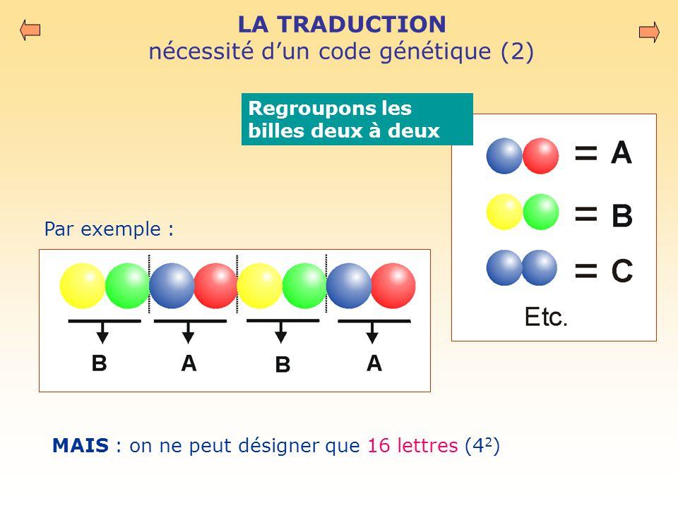 LA TRADUCTION nécessité d'un code génétique (2) MAIS : on ne peut désigner que 16 lettres (4 2 ) Regroupons les billes deux à deux Par exemple :