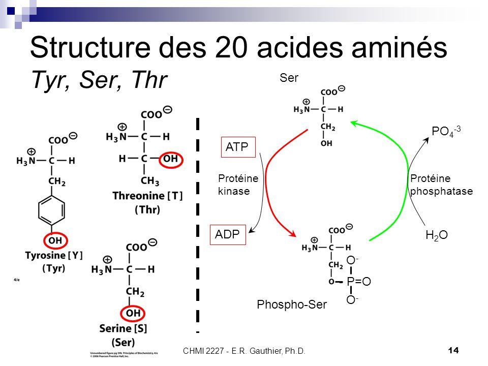 CHMI 2227 - E.R. Gauthier, Ph.D.14 Structure des 20 acides aminés Tyr, Ser, Thr Ser - P=O O-O- O-O- Phospho-Ser Protéine kinase Protéine phosphatase A