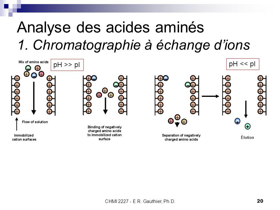 CHMI 2227 - E.R. Gauthier, Ph.D.20 Analyse des acides aminés 1. Chromatographie à échange d'ions Élution + + pH >> pI pH << pI