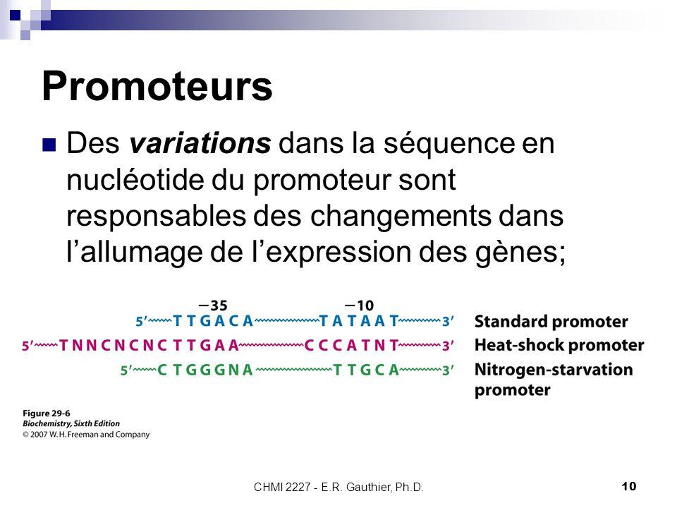 CHMI 2227 - E.R. Gauthier, Ph.D.10 Promoteurs Des variations dans la séquence en nucléotide du promoteur sont responsables des changements dans l'allu