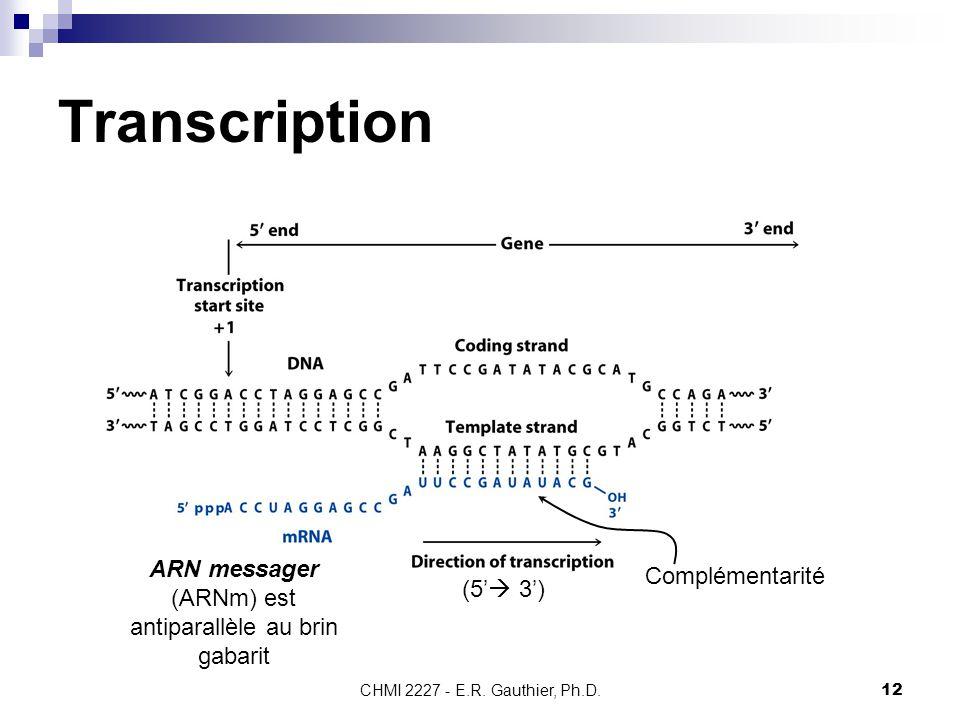 CHMI 2227 - E.R. Gauthier, Ph.D.12 Transcription (5'  3') ARN messager (ARNm) est antiparallèle au brin gabarit Complémentarité