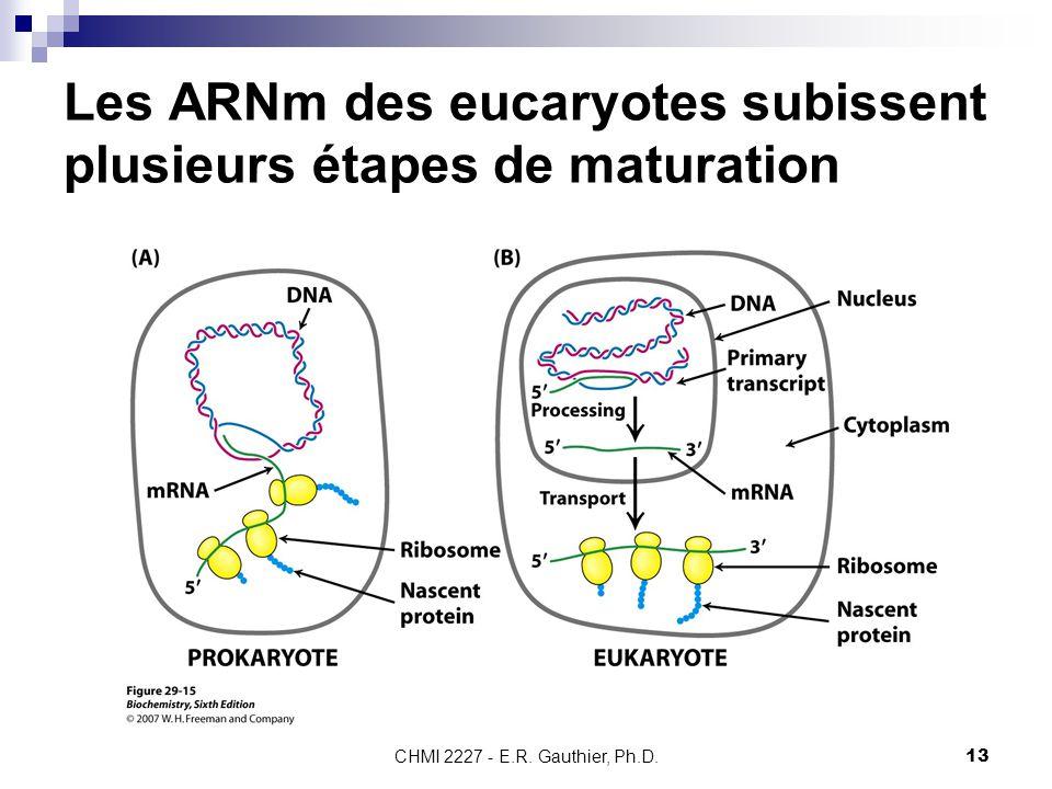 CHMI 2227 - E.R. Gauthier, Ph.D.13 Les ARNm des eucaryotes subissent plusieurs étapes de maturation