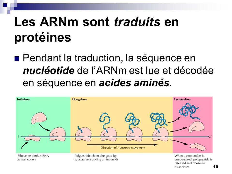 CHMI 2227 - E.R. Gauthier, Ph.D.15 Les ARNm sont traduits en protéines Pendant la traduction, la séquence en nucléotide de l'ARNm est lue et décodée e
